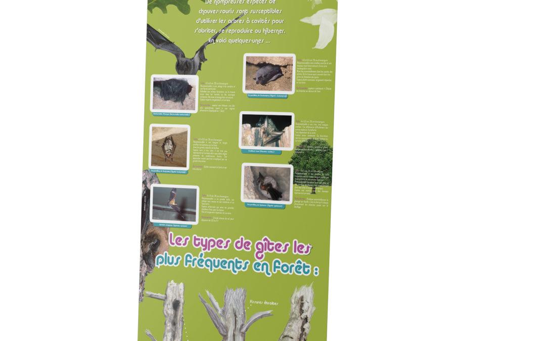 Roll-up – Les chauves-souris de nos forêts!